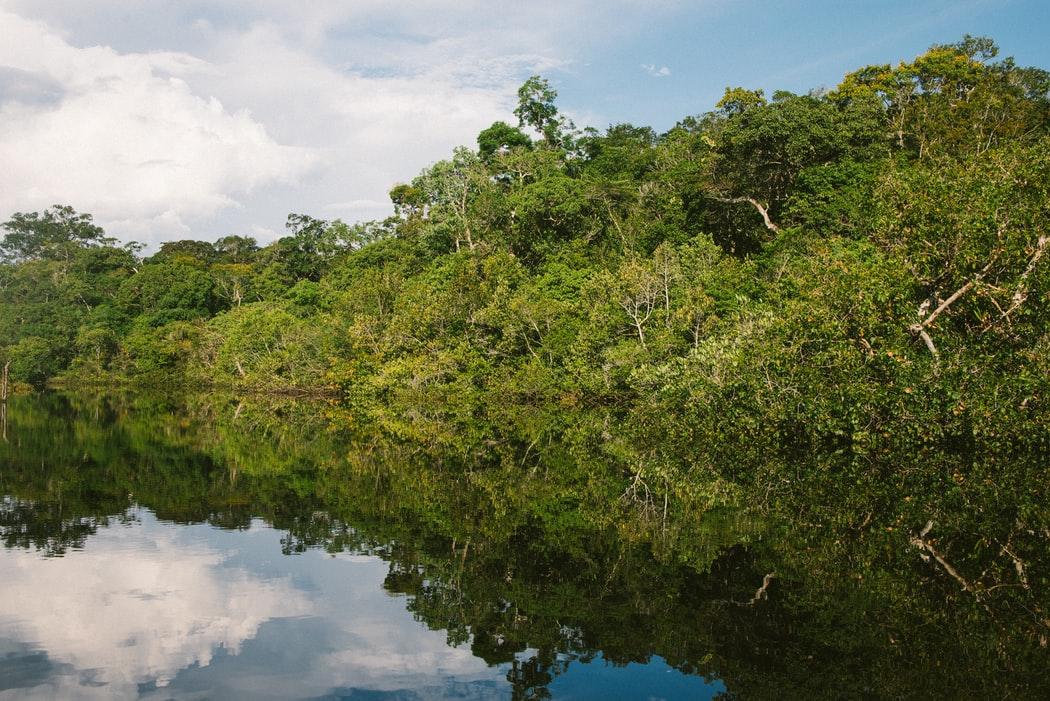 Planter des arbres en Amazonie