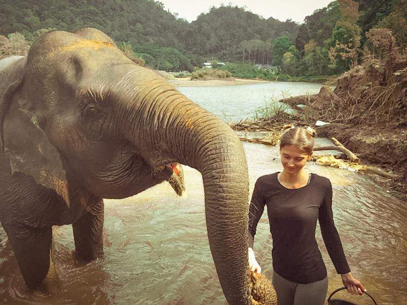 Protection des éléphants réserves