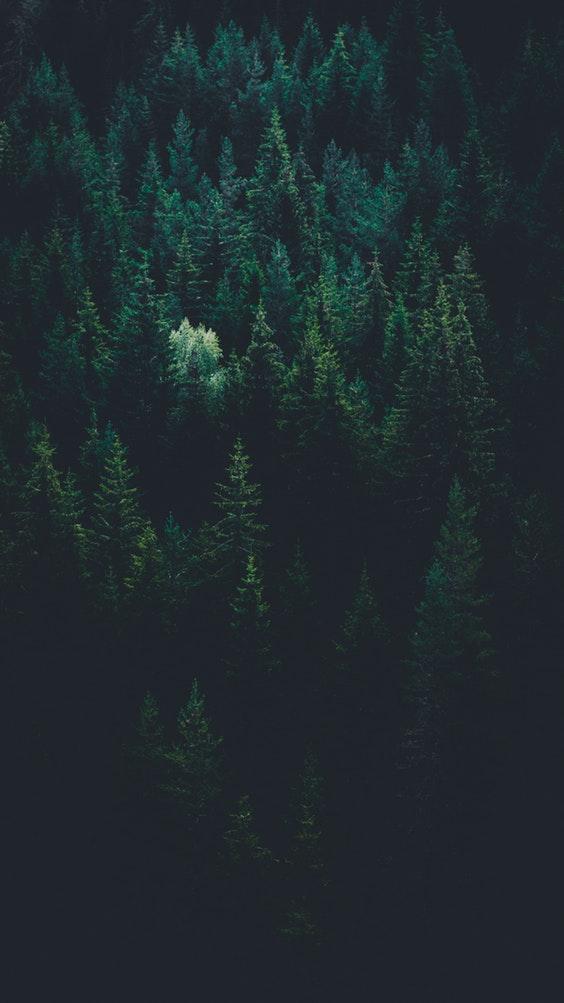 RE-GREEN THE PLANET programme de reforestation de la planète créé par le Free Spirit