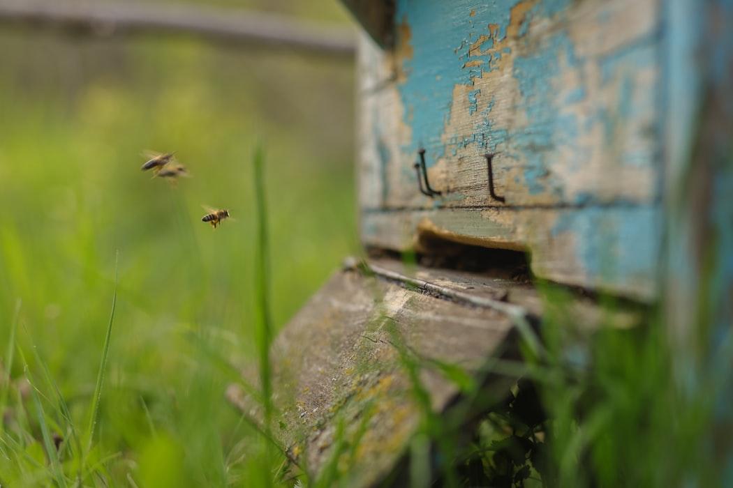 parrainer les abeilles