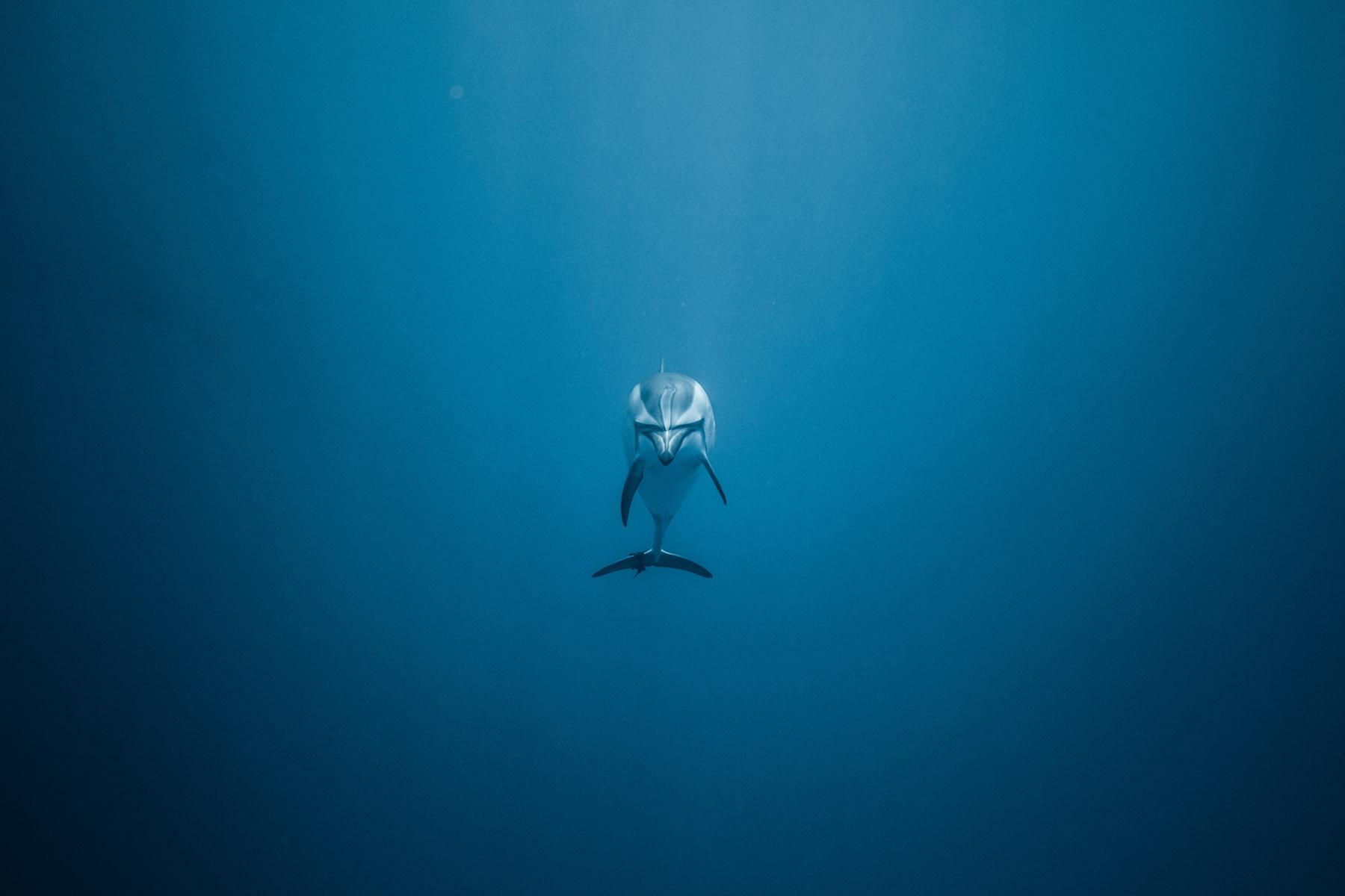 Home protection des océans