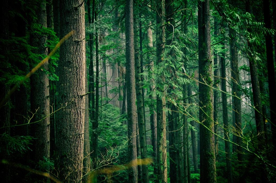 programme de reforestation de la planète Re-Green The planet par Free Spirit