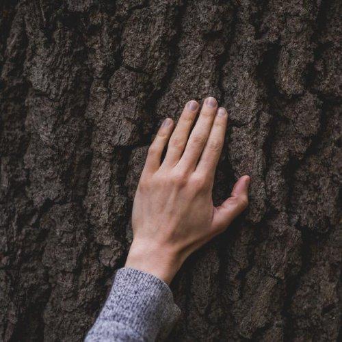 PLANTER UN ARBRE geste eco-responsable
