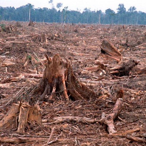 consommation d huile de palme deforestation