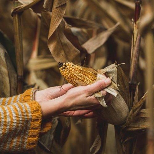 JE DIS NON AUX OGM