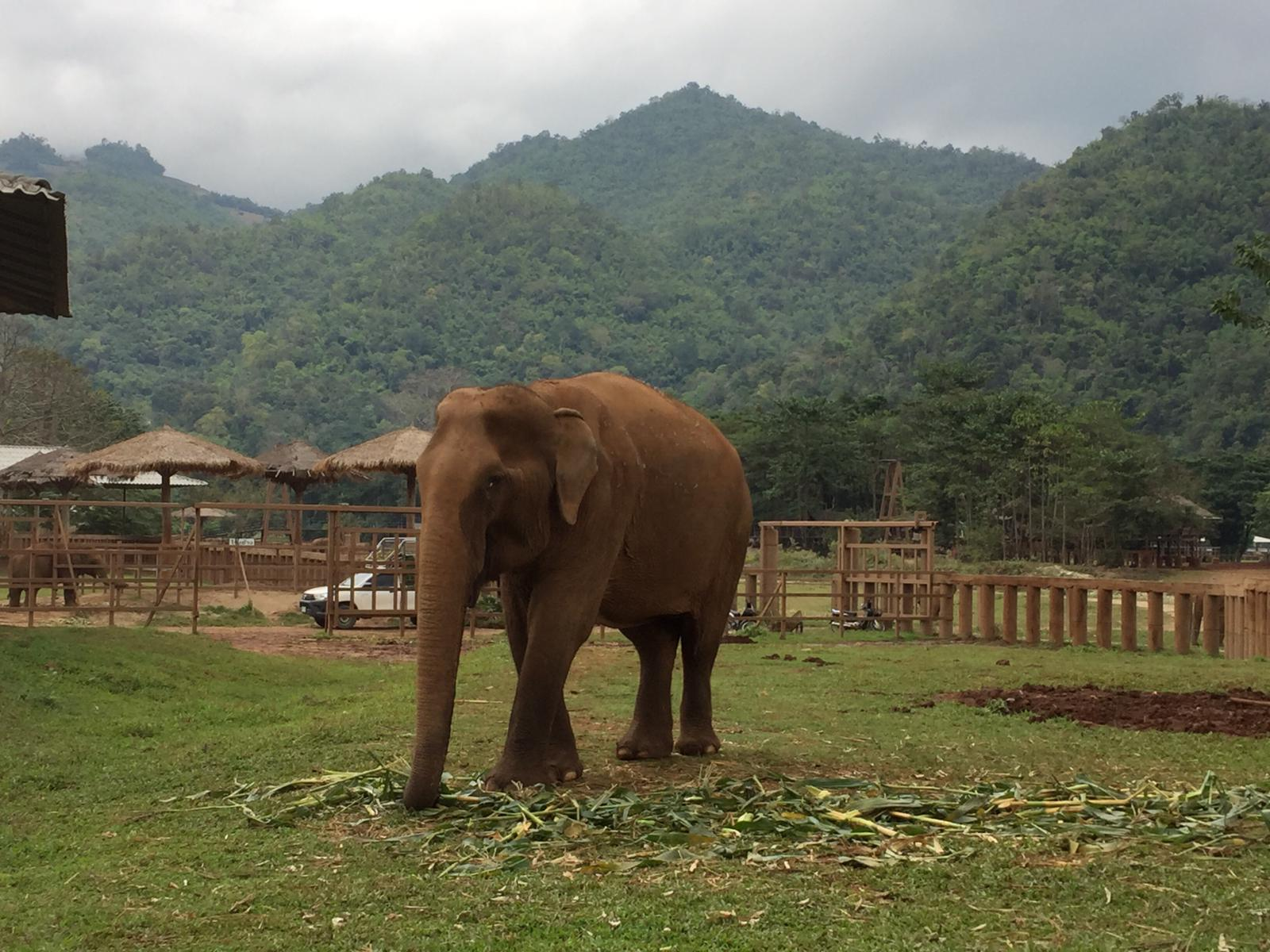 Réserve d'éléphants enThaïlande