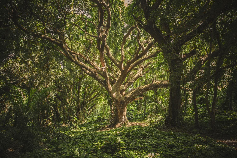 Ban Kenya arbres