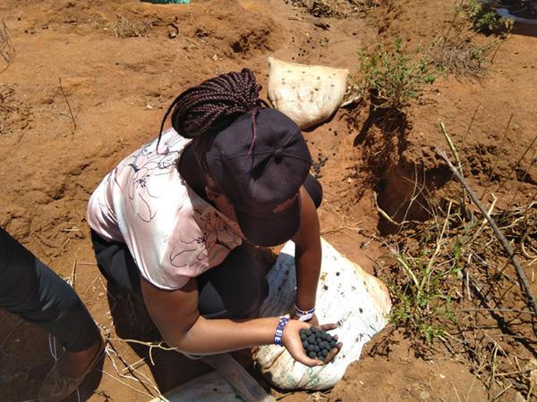 Planter des arbres en Afrique Kenya seedballs Acacia