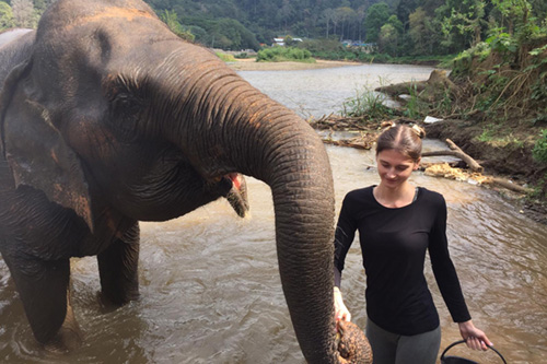 Réserve d'éléphants en Thaïlande