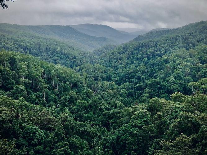 RE-GREEN THE PLANET Planter des arbres en Amazonie - reforestation