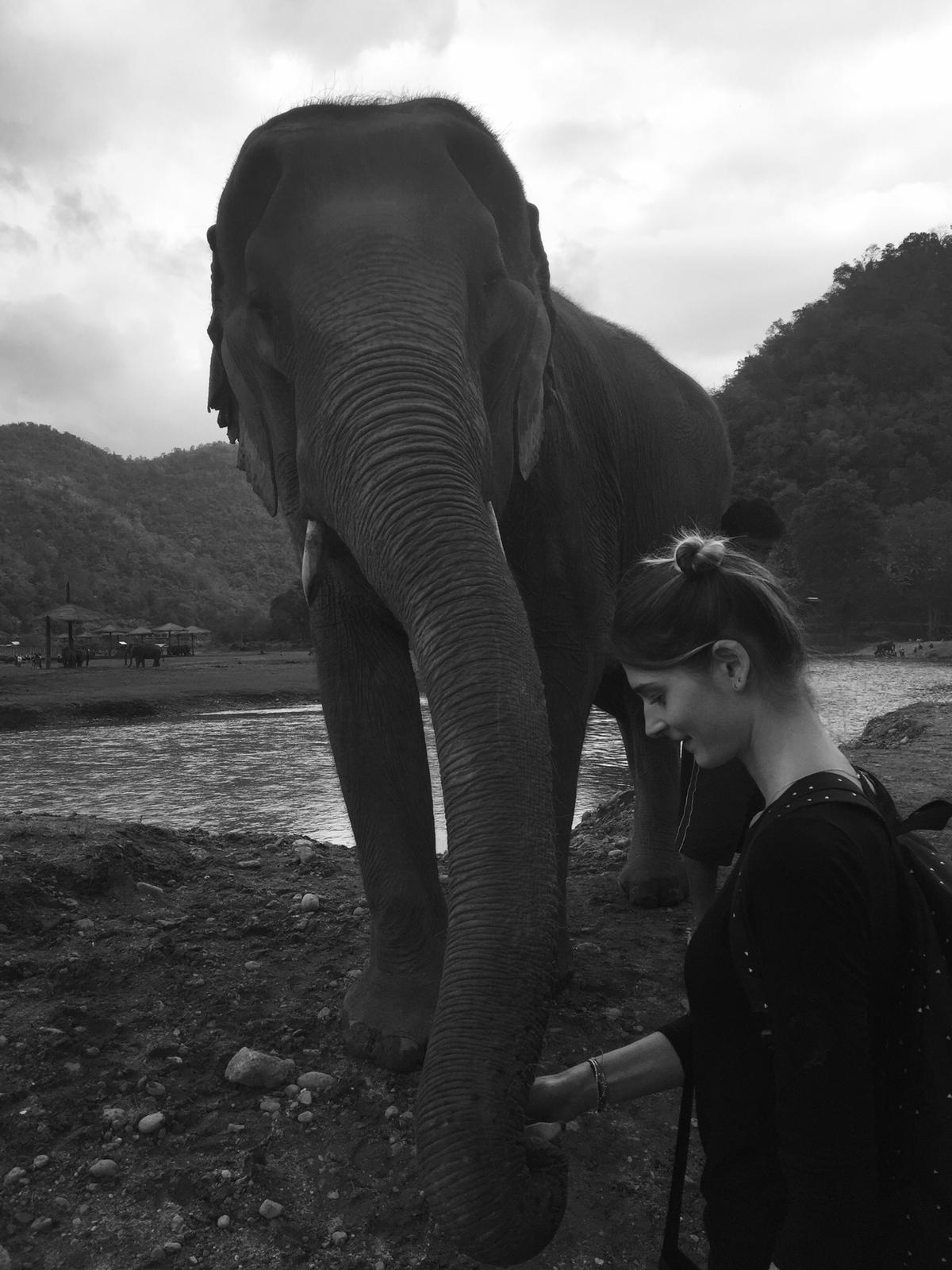 Réserve et refuge d'éléphants en Thaïlande - faire un don