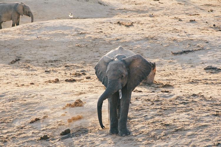 Refuge éléphanteaux au Kenya