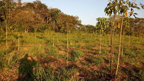 Planter des arbres pour lutter contre le réchauffement climatique
