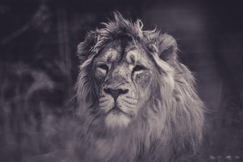 Zoohackathon Hackaton la tech pour lutter contre le trafic d'animaux sauvages