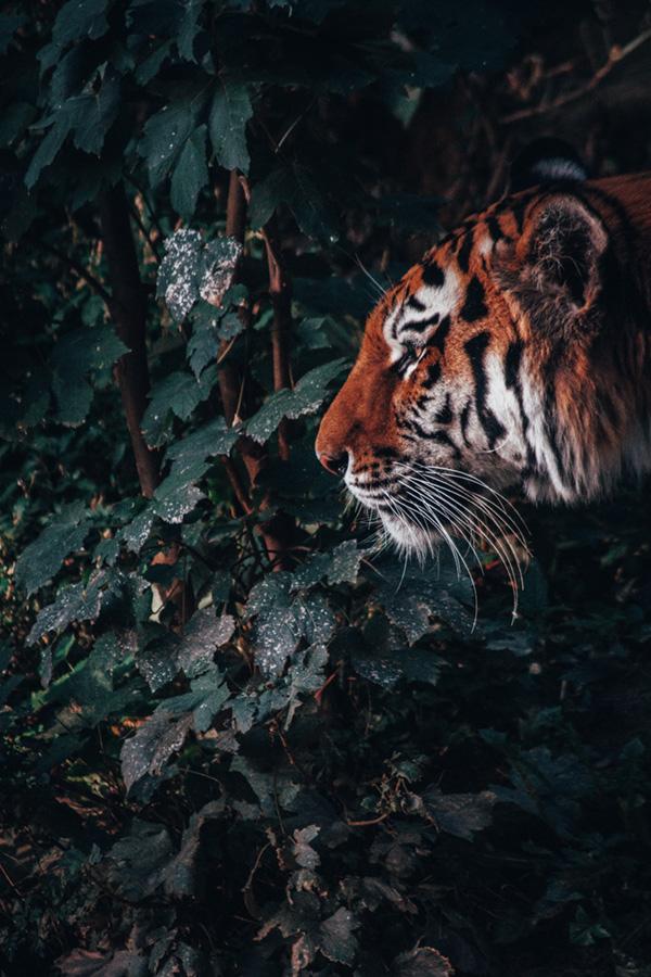 Zoohackathon 2020 Hackathon lutte contre e trafic d'animaux sauvages